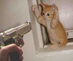 cat, gun, and funny image