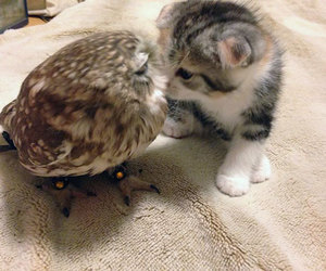 owl, cat, and kitten image