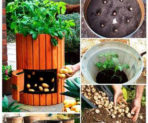 diy, homemade, and planting image