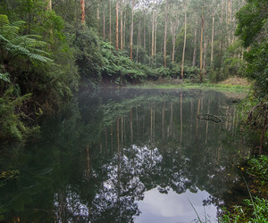 forest and water image