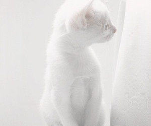 aesthetic, animal, and cat image