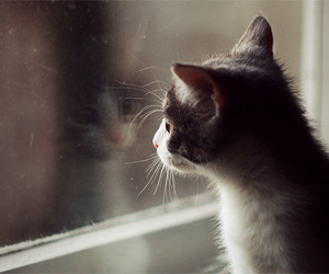 cute, cat, and window image
