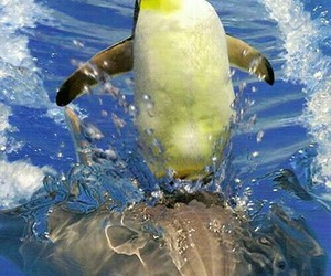 dolphin, penguin, and funny image