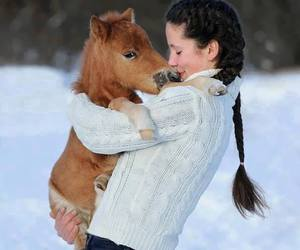 horse, pony, and snow image