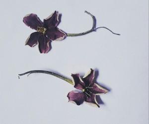 vintage flowers image