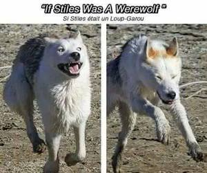 funny, dog, and teen wolf image