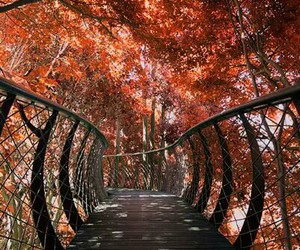 autumn, bridge, and forest image
