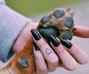 dog, tattoo, and nails image
