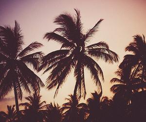 beach, bikinis, and summer image