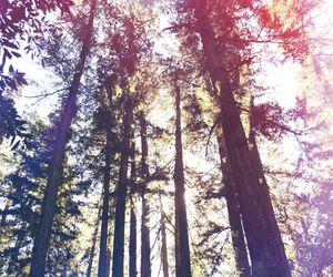 god, life, and nature image