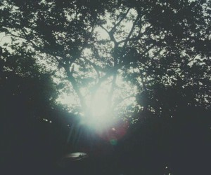 shine, tree, and cause today is a new day image