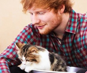 ed sheeran and cat image