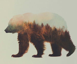 animal, bear, and nature image