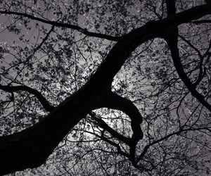 black and white, tree, and varnuak image
