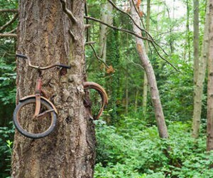 tree, nature, and bicycle image