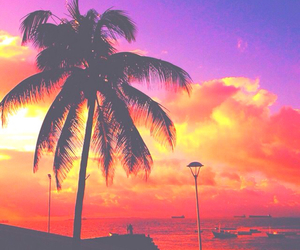 beautiful, palm trees, and summer image