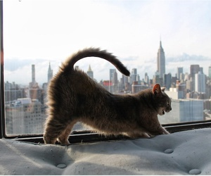 cat and new york image