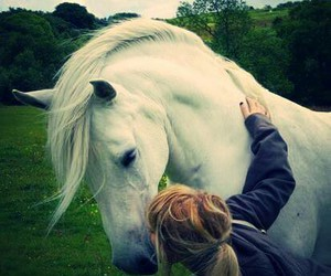 horse, white, and kiss image