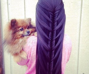 hair, dog, and purple image