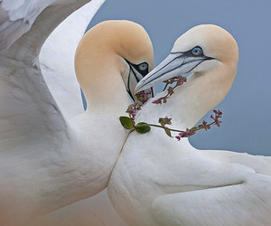 birds, nature, and love image