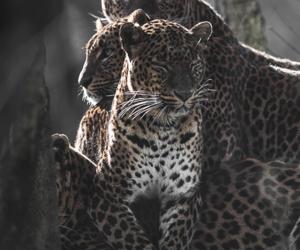 cute animals and wild animals image