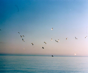 beautiful, film, and photography image
