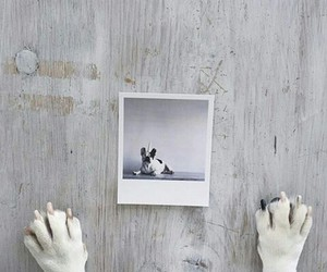 dog, memories, and picture image