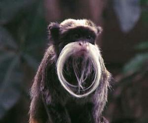 animals, monkey, and nature image