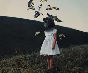 bird, art, and nature image
