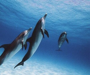dolphin and blue image