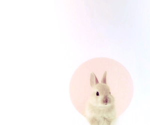 background, rabbit, and cute image