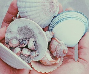 shells and ocean things image