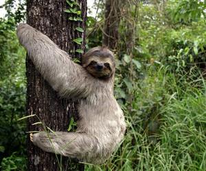 sloth and animal image