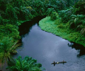 nature, river, and green image