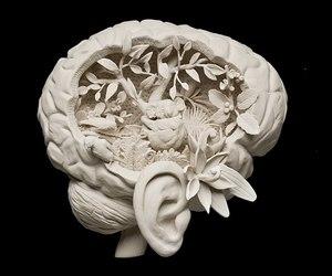 brain, Koala, and sculpture image