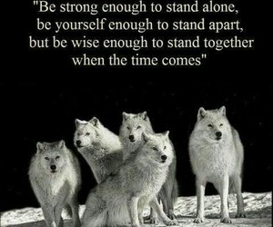 wolf, quotes, and strong image