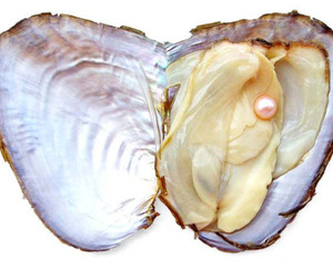 pearls, oyster, and shell image