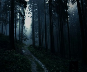 dark, woods, and dark florest image