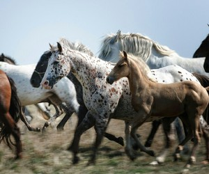 horses and beautiful image