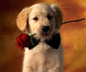 dog, rose, and puppy image