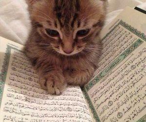 cat, islam, and animal image