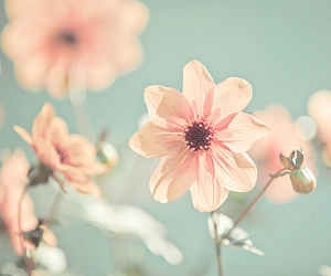 garden, pink, and flower image
