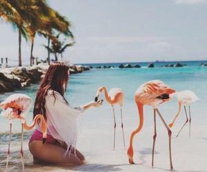 amazing, animal, and beach image