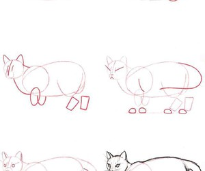 cat and how to draw image