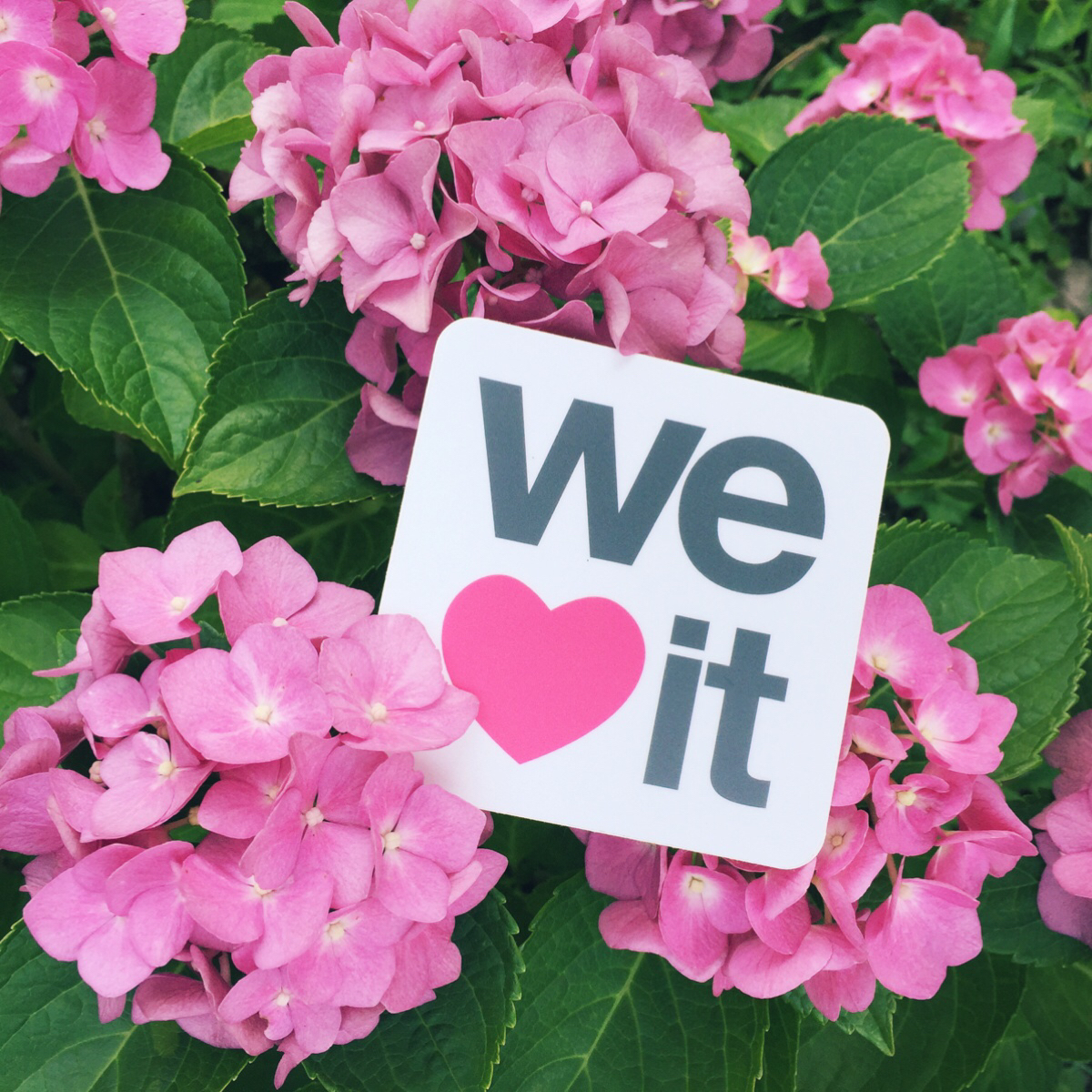 we heart it and flowers image