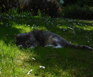 cat, flower, and garden image