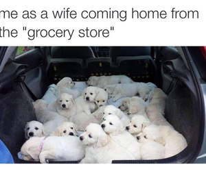 puppy, dog, and wife image