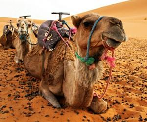 animal, beautiful, and marocco image