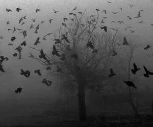 bird, tree, and dark image