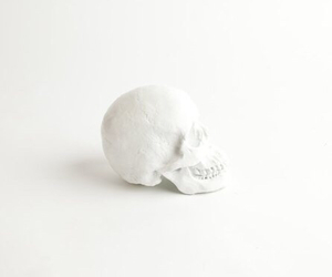 photography, skull, and white image